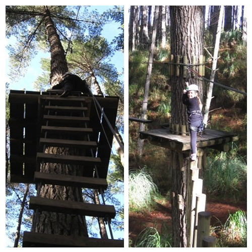 TreeAdventures_1